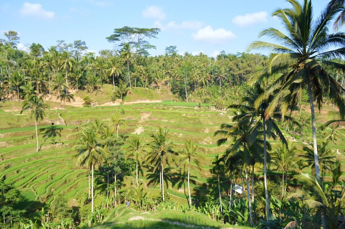 Indonesia 323